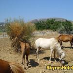 Skyros Horses